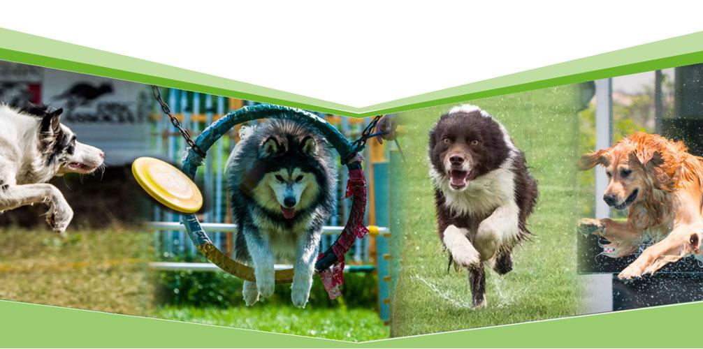 萌物园 - 宠物培训