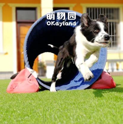 宠物培训(包含寄养费用,不含狗粮)萌物园宠物民宿